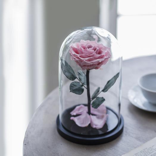 Роза в колбе Premium розовая: букеты цветов на заказ Flowwow