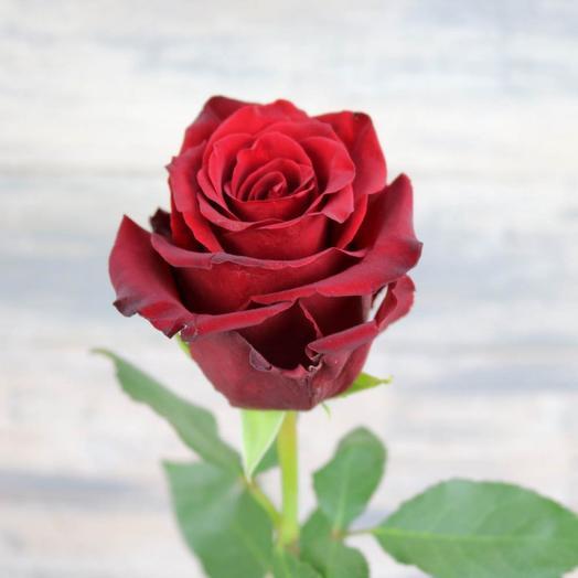 Роза красная Эксплорер 50 см