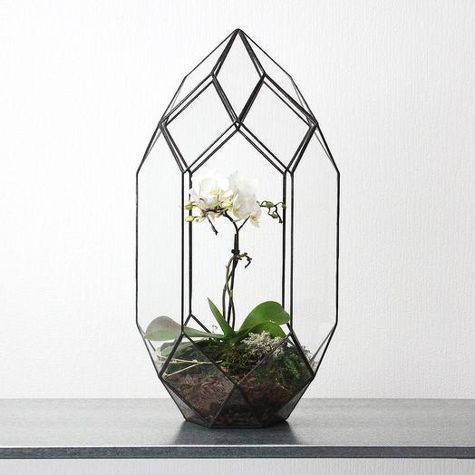 Флорариум Ракета с Орхидеей