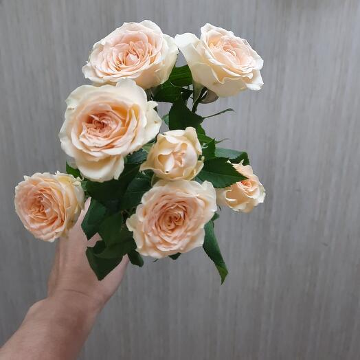 Роза кустовая Salinero