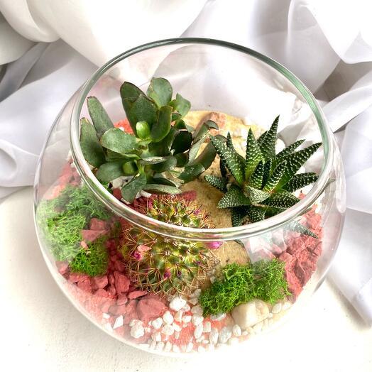 Флорариум «розовое чудо»
