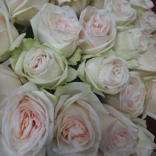 Ароматная роза