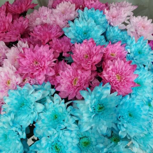 Хризантема кустовая цветная 1 шт