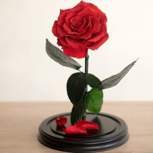 Роза в колбе Премиум красная: букеты цветов на заказ Flowwow