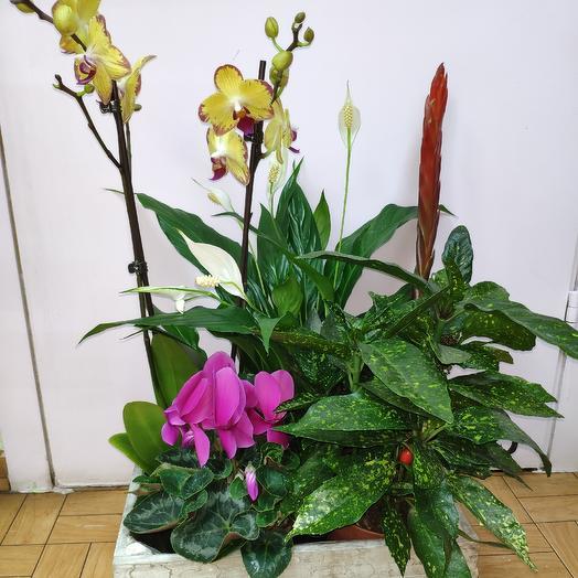 Микс комнатных растений в ящике: букеты цветов на заказ Flowwow
