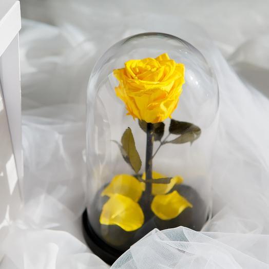 Роза в колбе «King» жёлтая