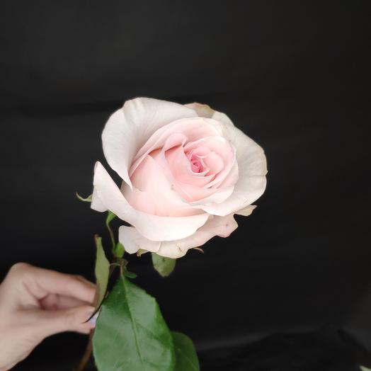 Нежная роза 40 см