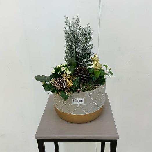 Комнатное растение Новогодняя композиция со звёздами