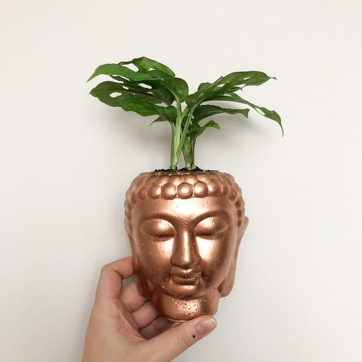 Голова Будды из бетона покрытая медью с Монстерой Косой