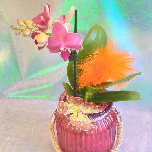 Очаровательная орхидея
