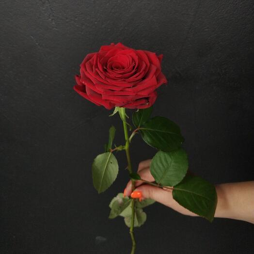 Роза Росиия