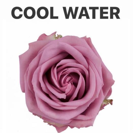 Роза сиреневая COOL WATER 60 см