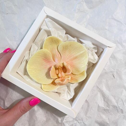 Орхидея Бельгийский шоколад