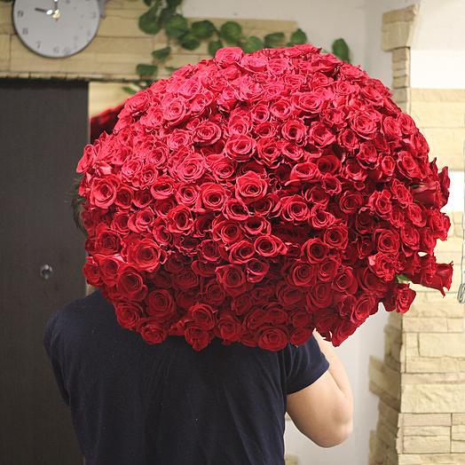 101 эквадорская роза длинной 60 см: букеты цветов на заказ Flowwow