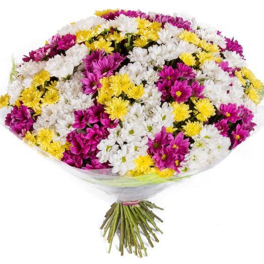 """Букет из 35 хризантем """"3 цвета счастья"""": букеты цветов на заказ Flowwow"""