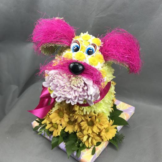 Дружок: букеты цветов на заказ Flowwow