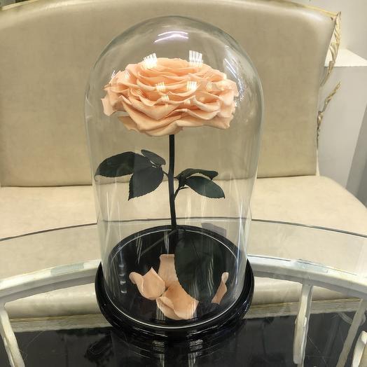 Роза в колбе персиковая