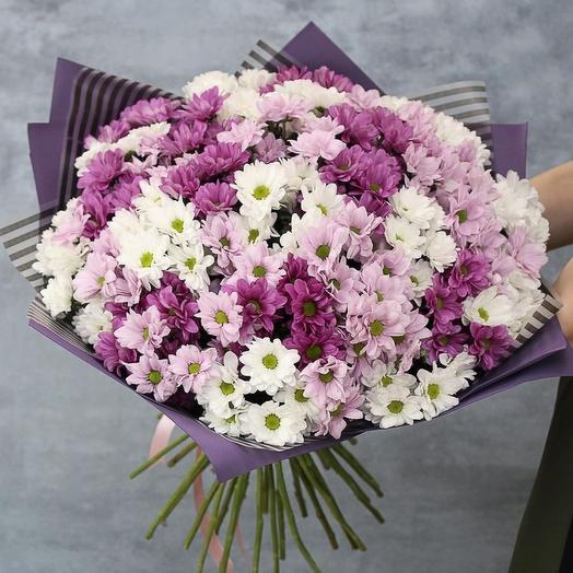 25 хризантем бело-розовые в оформление