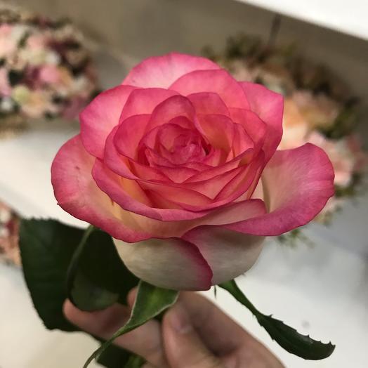 Rose Jamilia
