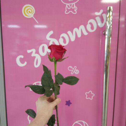 Роза Готча 50 см