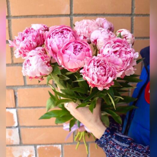 11 розовых французских пионов