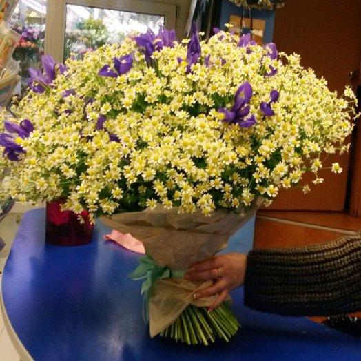 Ирисы на ромашковом поле: букеты цветов на заказ Flowwow