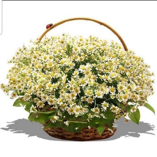 Полевая корзина: букеты цветов на заказ Flowwow