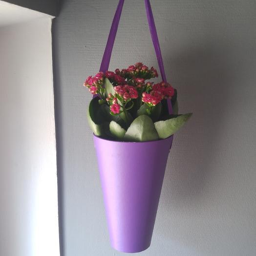 "Ярко-розовое каланхоэ ""Каландива"": букеты цветов на заказ Flowwow"