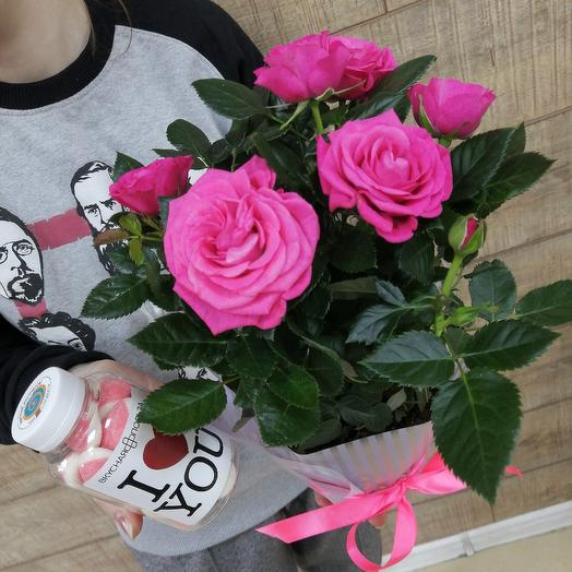 Розочка для любимой: букеты цветов на заказ Flowwow