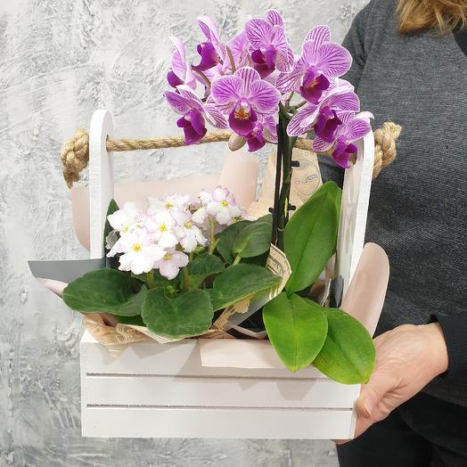 Орхидея и фиалка в ящике