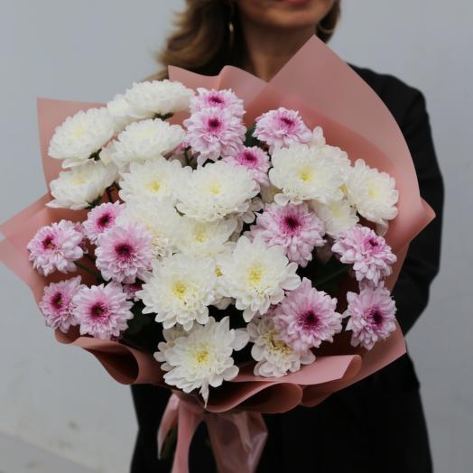 Хризантемы кустовая 9шт