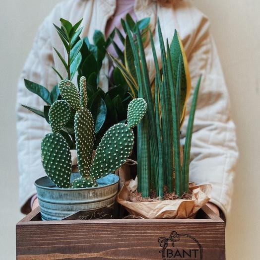 Набор комнатных растений