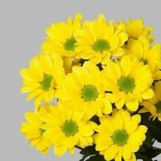 Хризантема кустовая желтая -1 веточка (количество любое)
