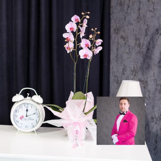2-х веточная розовая орхидея с премиум доставкой: букеты цветов на заказ Flowwow