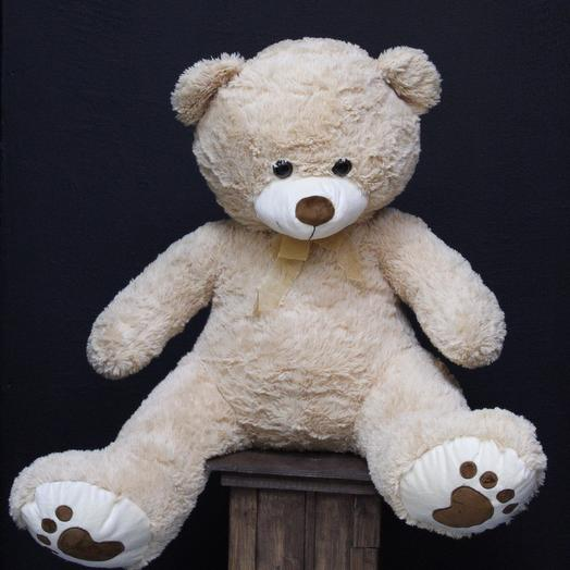Мишка Teddy 🐻