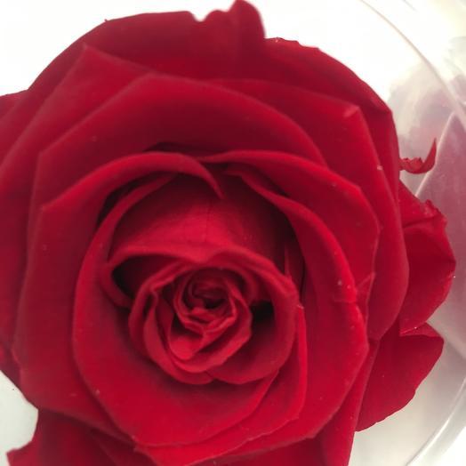 Роза стабилизированная