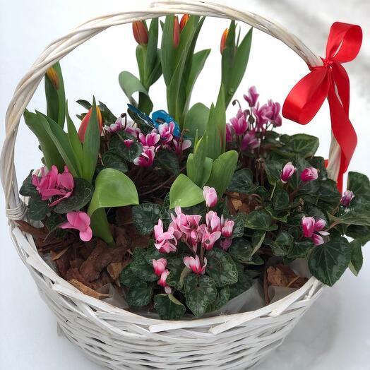 Весенние цветы в корзинке