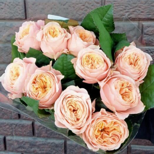 Роза пионовидная  10шт
