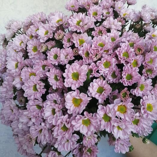 Шикарный букет из 25 кустовых хризантем