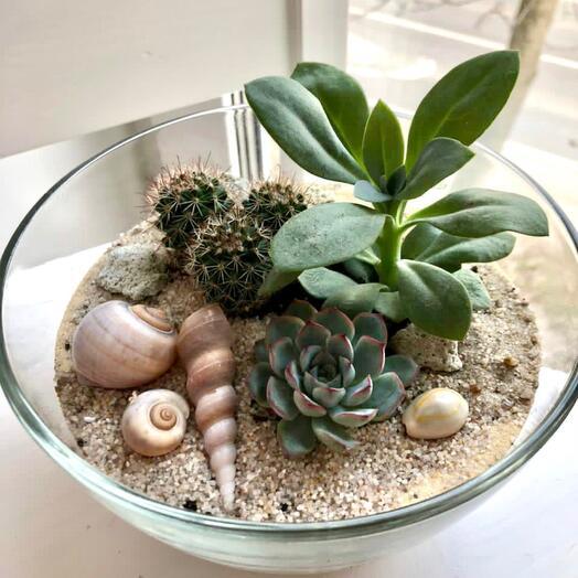Флорариум «песчаный берег»