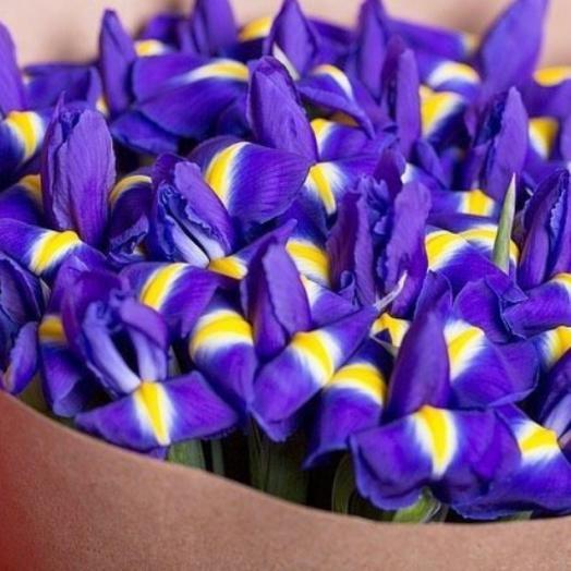 Букет из 49 синих ирисов: букеты цветов на заказ Flowwow