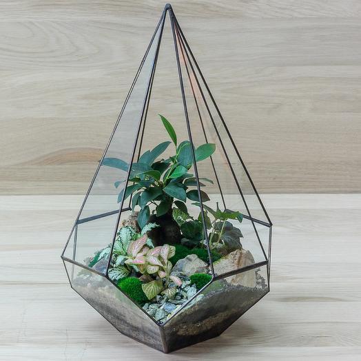 "Геометрический флорариум ""Азия"": букеты цветов на заказ Flowwow"