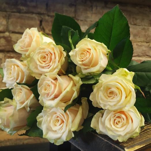 Роза пудровая 9