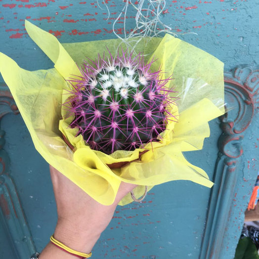 Веселый кактус: букеты цветов на заказ Flowwow