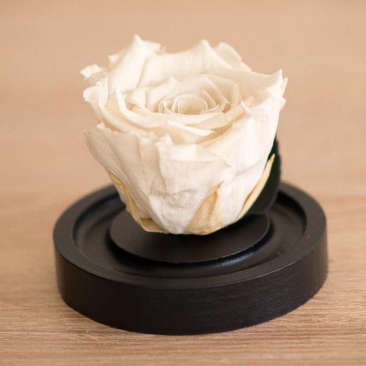 Роза в колбе Микро белая: букеты цветов на заказ Flowwow