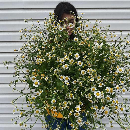 Полевой букет из матрикарии: букеты цветов на заказ Flowwow