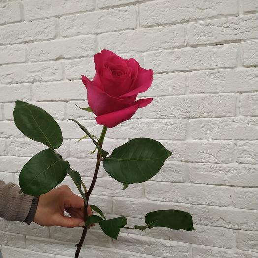 Роза Эквадор Pink Floyd 60 см