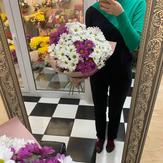 Chrysanthemum 9