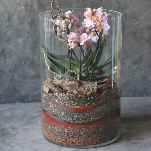 Флорариум в вообще цилиндр с орхидеей и декоративной отсыпкой
