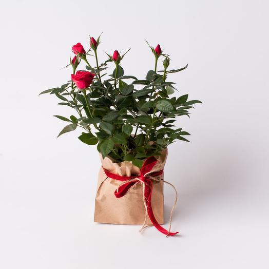 Роза микс в крафтовой упаковке